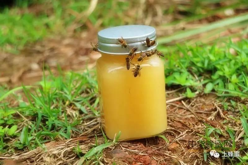 【什么牌子的蜂蜜比较好】_有一种蜜叫冬桂,你喝过吗?