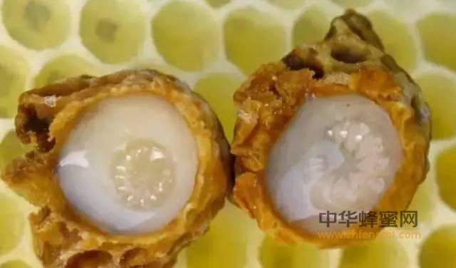 """世界上最好的""""长寿药""""居然是蜂王浆!"""