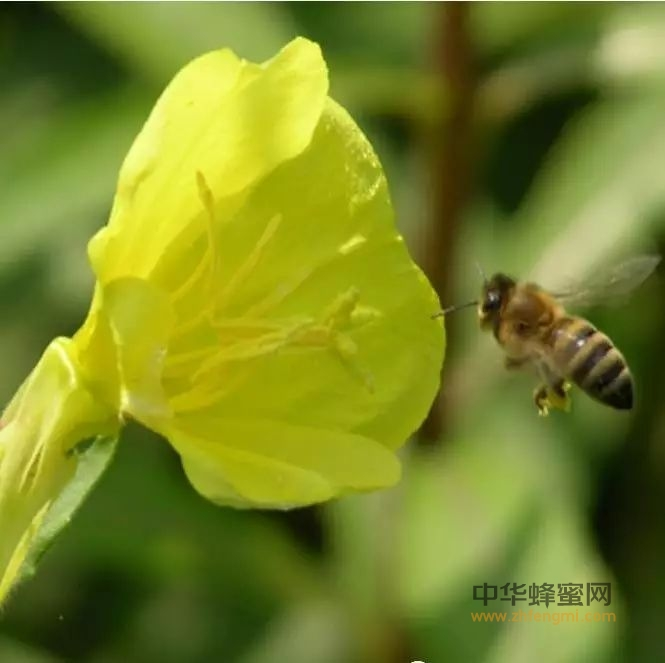 【蜂蜜吃】_蜂国趣闻 蜜蜂王国那些让人震撼的数字