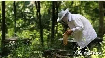 【怎样蜂蜜】_都说养蜂是老板,哪知老板好凄惨…