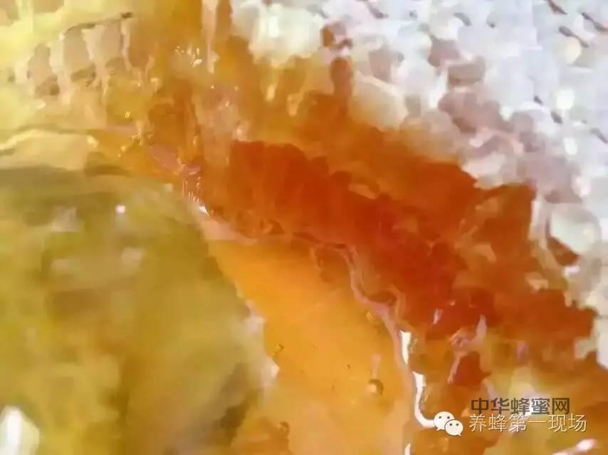 不是所有的蜂蜜都叫<a
