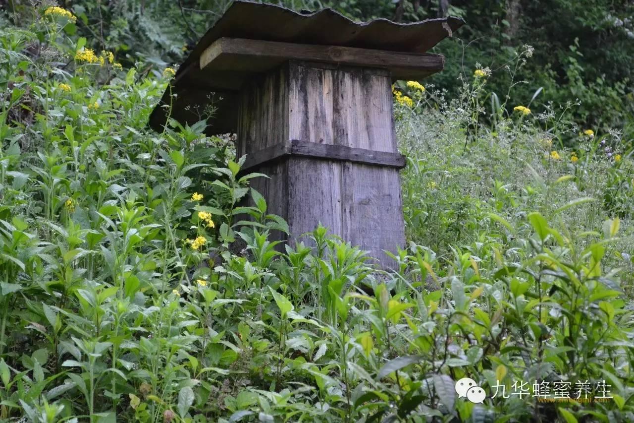 蜂蜜的食用方法以及功效,买蜂蜜必学的经验,大家可以转发让更多的朋友们看看,只有懂蜂蜜才能买到好蜂蜜。