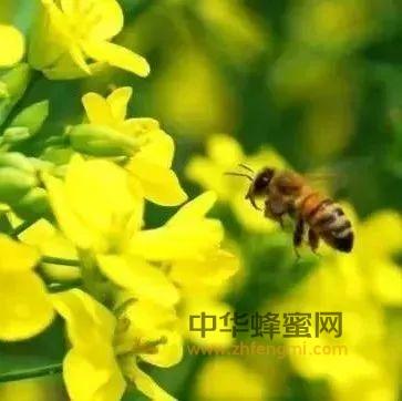 """花儿就有多""""美"""",花蜜就有多""""甜"""",各种花蜜长啥样?快来认识"""
