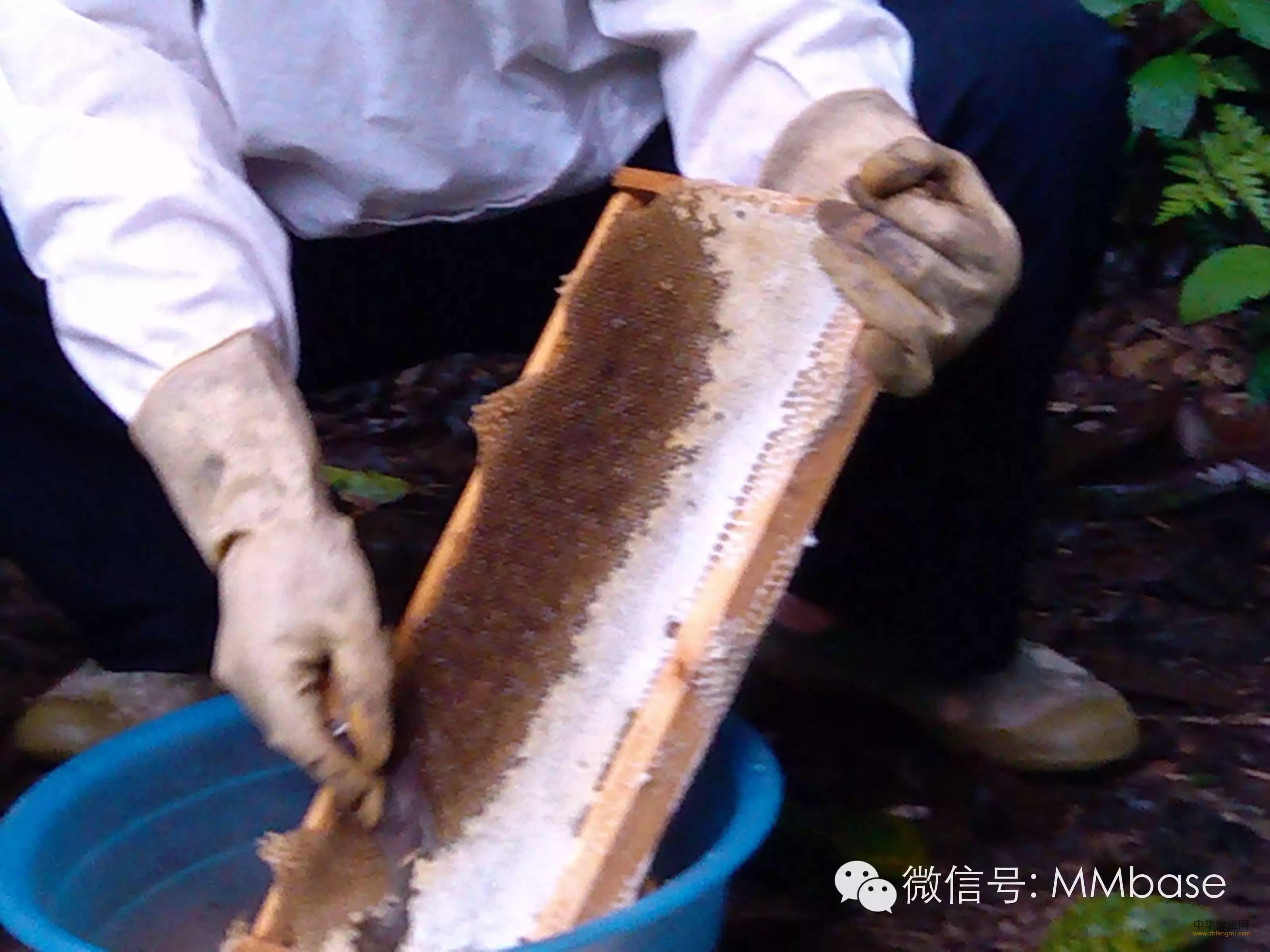 原来猫哥家的蜂蜜是那样卖的!