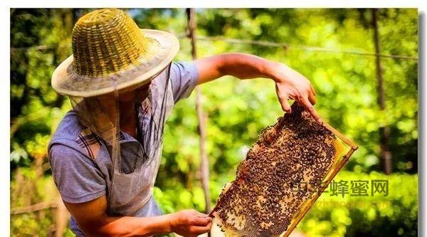 10个蜂蜜小知识,
