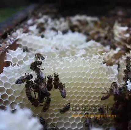没想到蜂巢也有这么多好处!