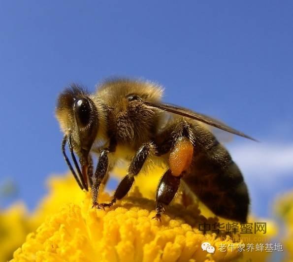【蜂蜜牛奶面膜】_爱蜂蜜的你应该更了解蜂蜜的分类与用途