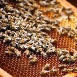 蜂群周年消长规律(看完,很有帮助!)