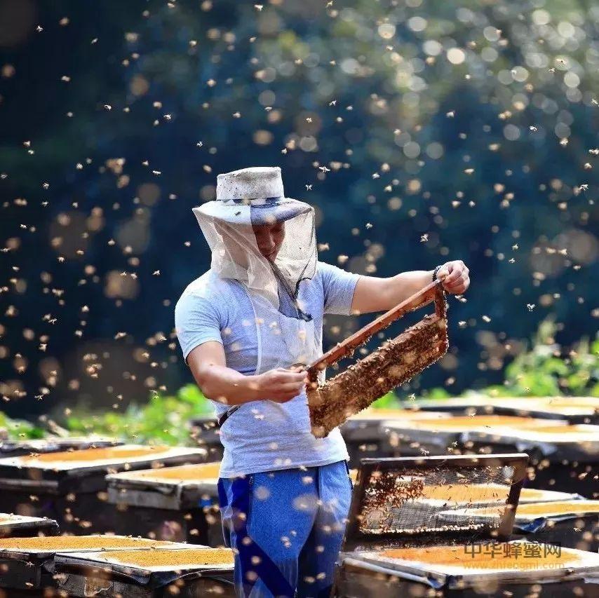 为抢蜜,八名歹徒耍流氓;因自卫,两框蜜蜂显神通!