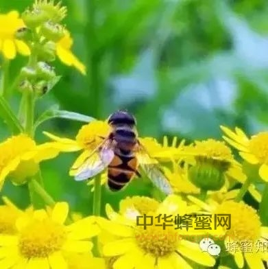 蜂蜜四宝有哪些,加一起效果会怎样?