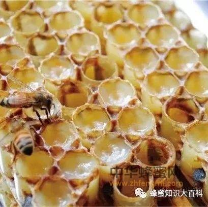 知道了这5件事,也就成了使用蜂王浆的专家!