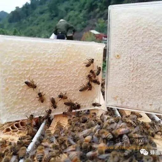 """嚼着吃的蜂蜜,被誉为""""鼻炎克星""""!"""