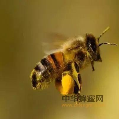 我是一只小蜜蜂,假蜜太多被抢饭碗,我是不是应该离巢出走?