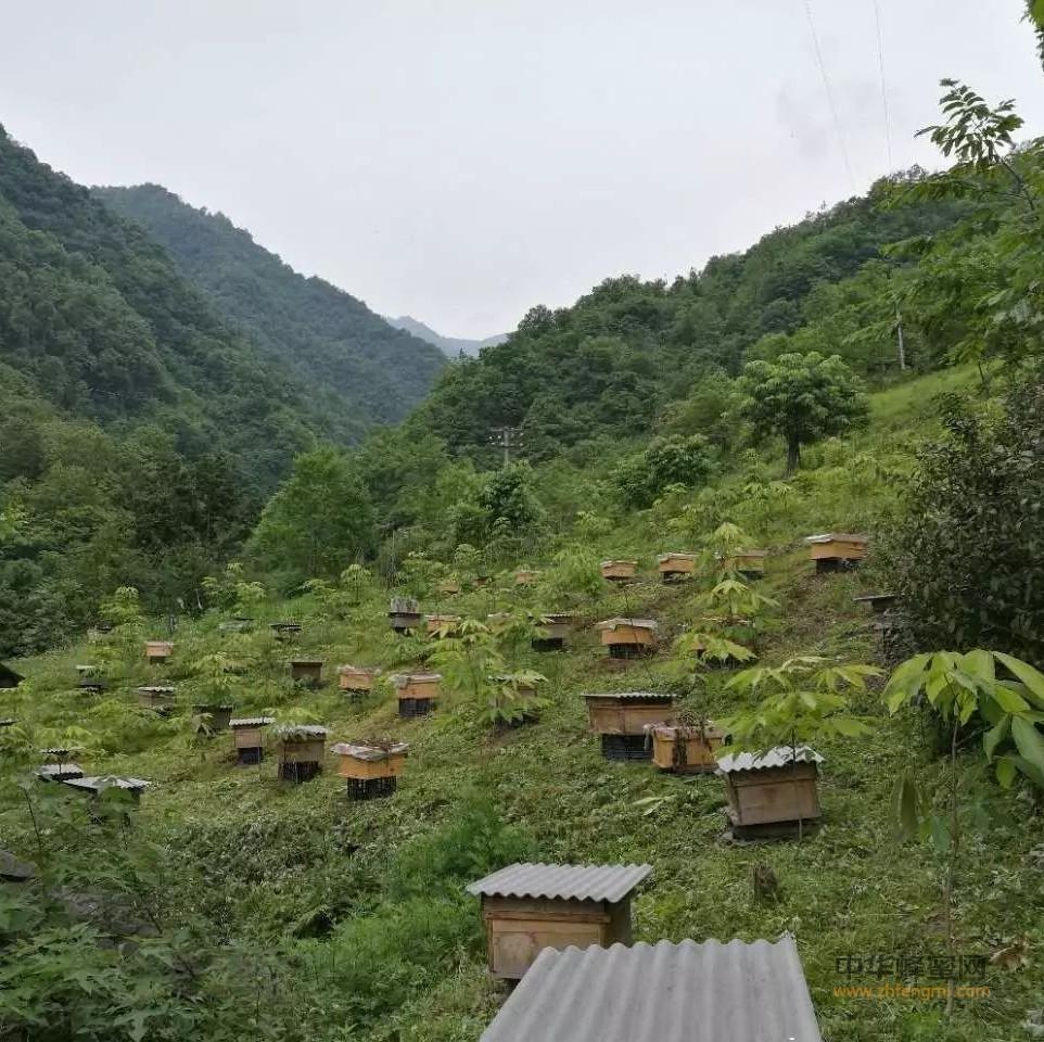 养蜂人为何全国到处跑?