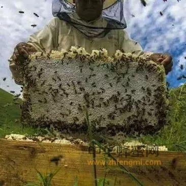 养蜂技术之蜂群合并
