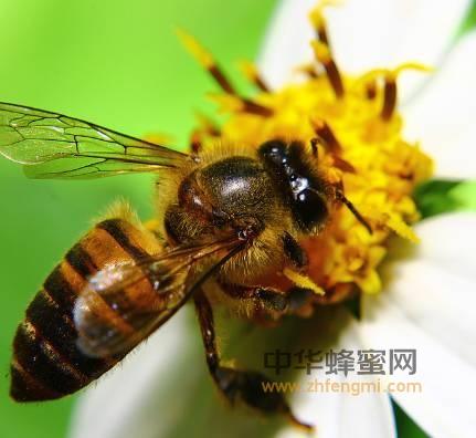 何以健康,唯有蜂蜜,