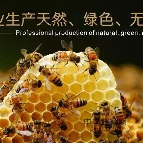 """嚼着吃的蜂蜜,号称""""鼻炎杀手""""!"""