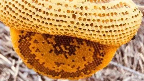 关于小排蜂蜜<a