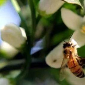 意蜂春繁十件事