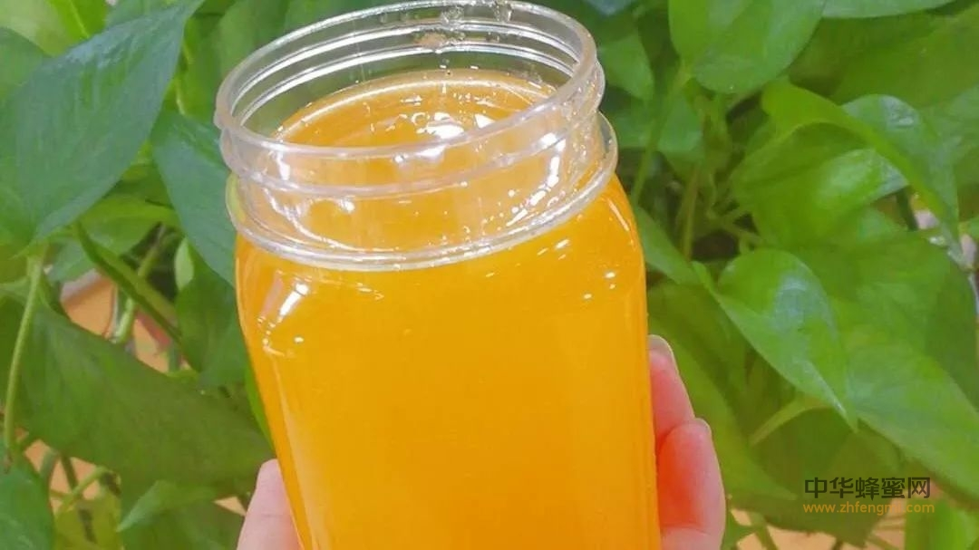 喝蜂蜜到底会不会得糖尿病?