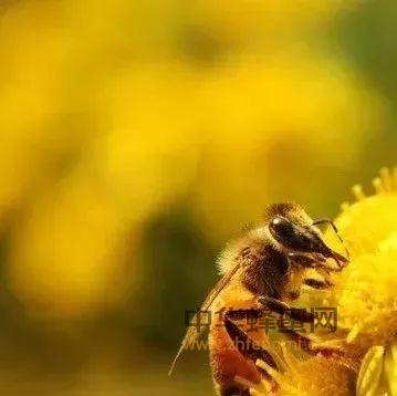 【养蜂技术】谈蜜蜂的春季繁殖技术