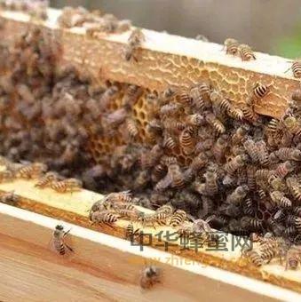 【蜂蜜柚子茶制作方法】_人工分蜂的方法与管理