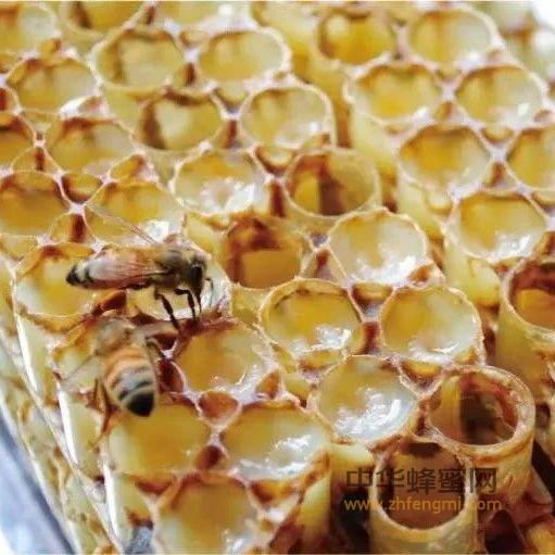 【酥油蜂蜜】_食用蜂王浆,贵在坚持