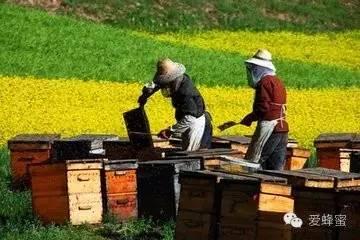 我是养蜂人