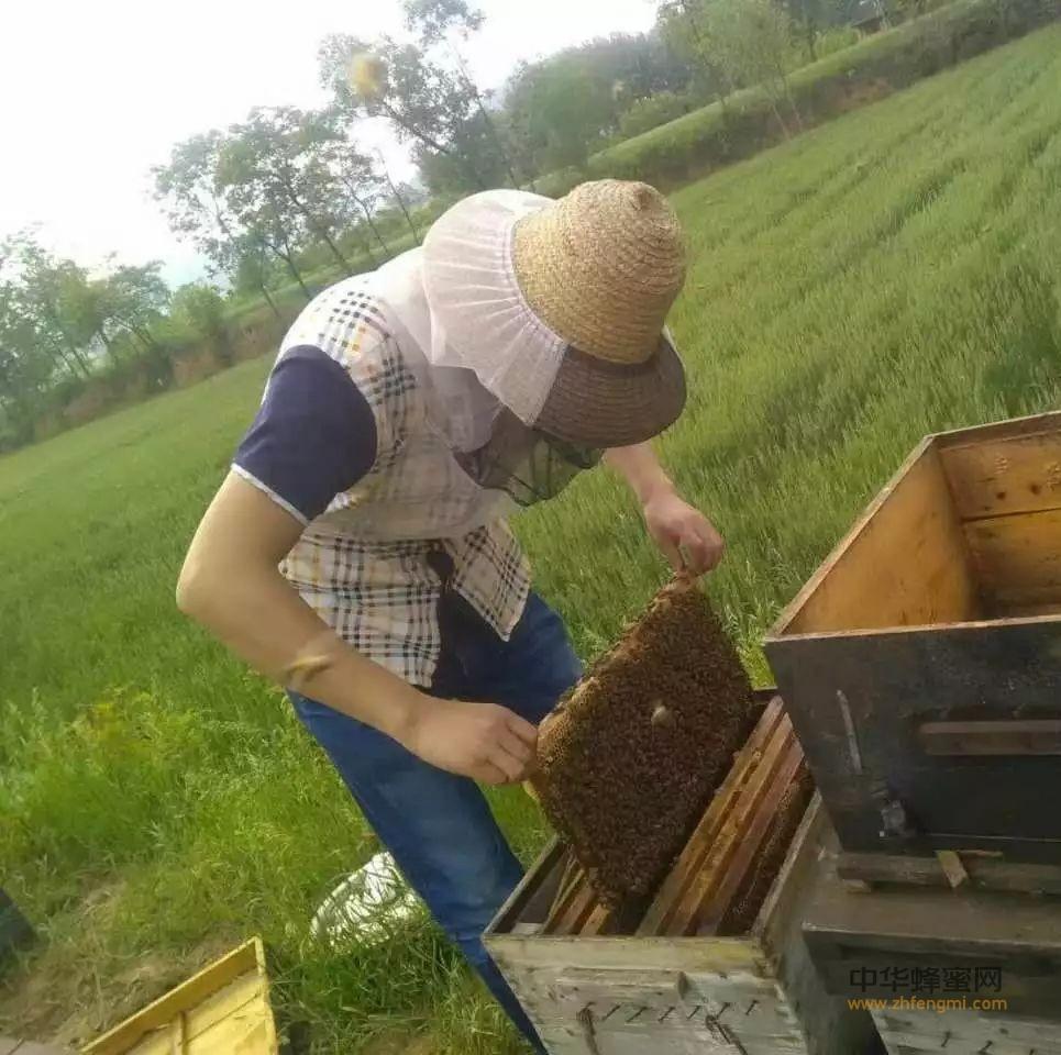【蜂蜜功效】_夏天的蜂群应该如何管理?