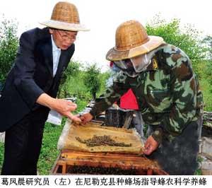 葛凤晨 先生指导蜂农