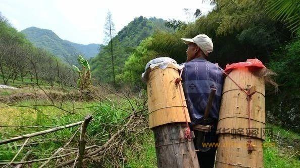 【蜂蜜功效作用】_农民养蜂为什么产量低下,走进山区才知道原因出在这里
