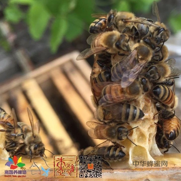 蜂蜜也能当药引?食用蜂蜜的注意事项
