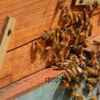 二氧化氯在养蜂上的使用<a