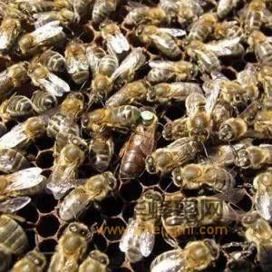 2018年养蜜蜂赚钱吗?一箱蜜蜂一年能赚多少钱?