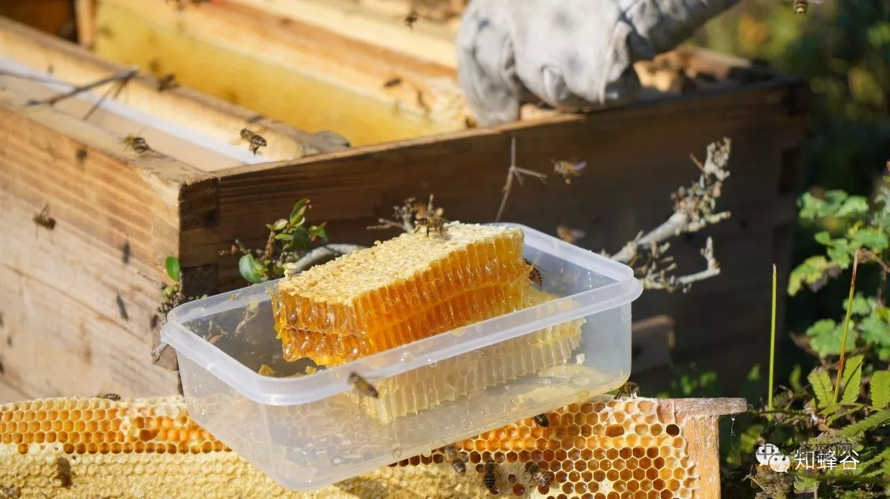 【纯牛奶加蜂蜜】_张家界知蜂谷巢蜜有哪些独特的特点?
