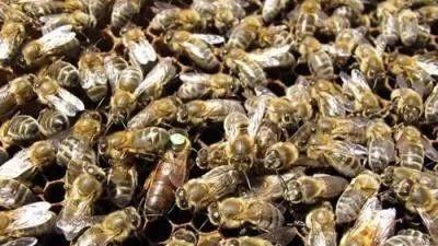【蜂蜜价格】_养蜂经验两则