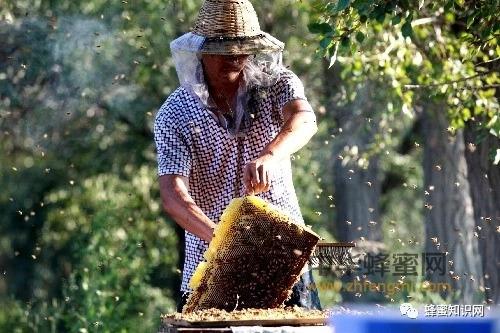【蜂蜜泡水】_这6种养蜂人,永远赚不到钱!