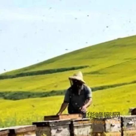 不是每个人都适合养蜂,请看…