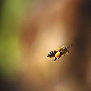 如何防止蜜蜂农药中毒