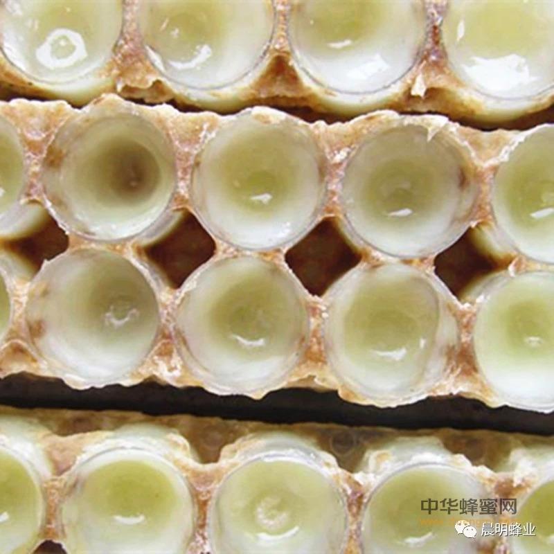 研究表明:蜂王浆抗高脂血症、防血栓!