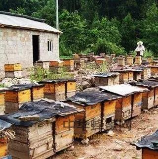 驯蜂是养蜂业的里程碑
