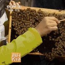 蜂蜜的九种养生吃法助你抵御秋燥