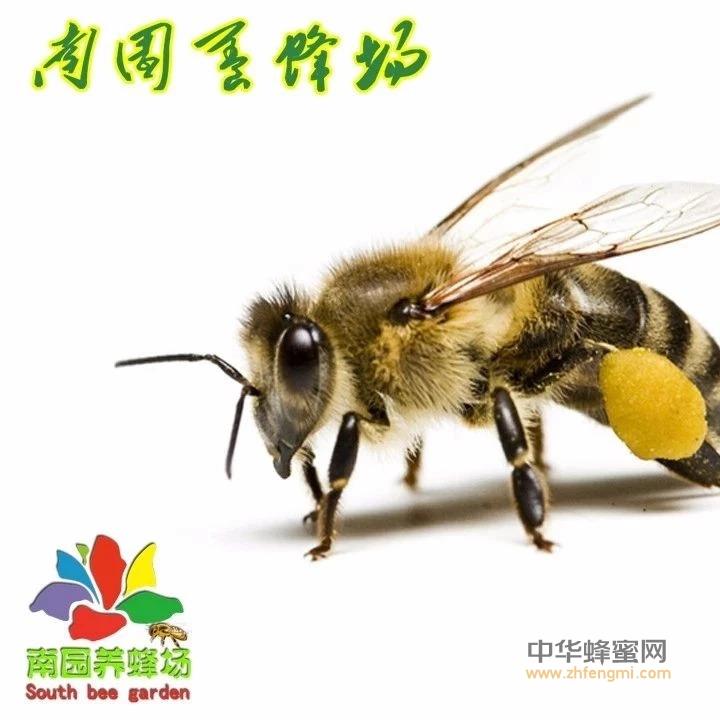 天然结晶蜂蜜与惨白糖蜂蜜的区别
