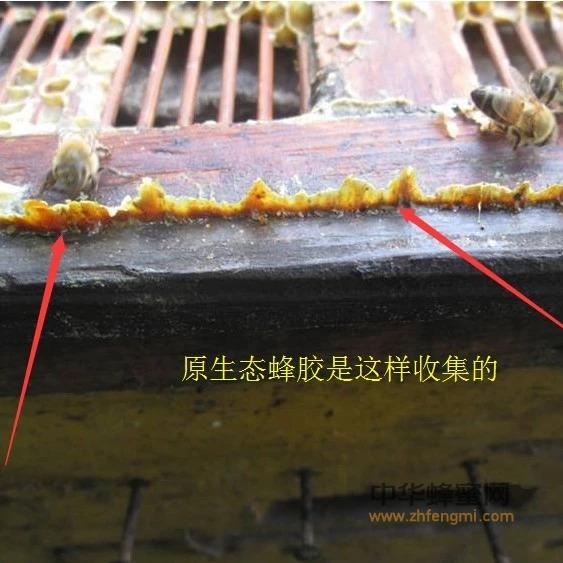 蜂胶真神了,对肝病也有用!