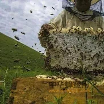 【蜂蜜醋减肥】_中蜂烂子病的症状和防治方法