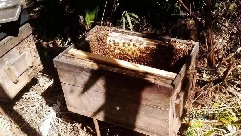 【蜂蜜  减肥】_原地分蜂的最好方法