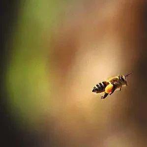 【蜂蜜加盟】_专家谈科学养蜂:病虫防治