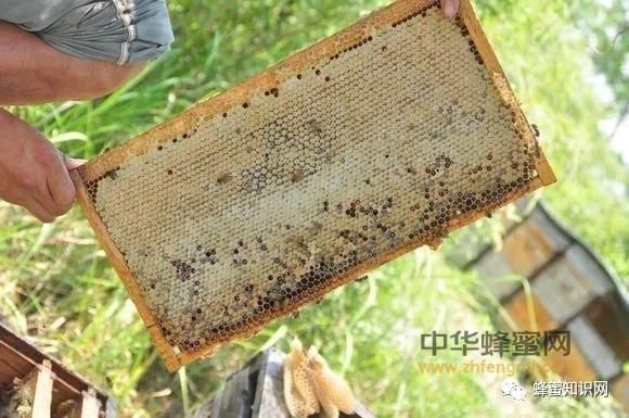 【蜂蜜保质期】_什么样的蜂蜜才是你真正需要的好蜂蜜?
