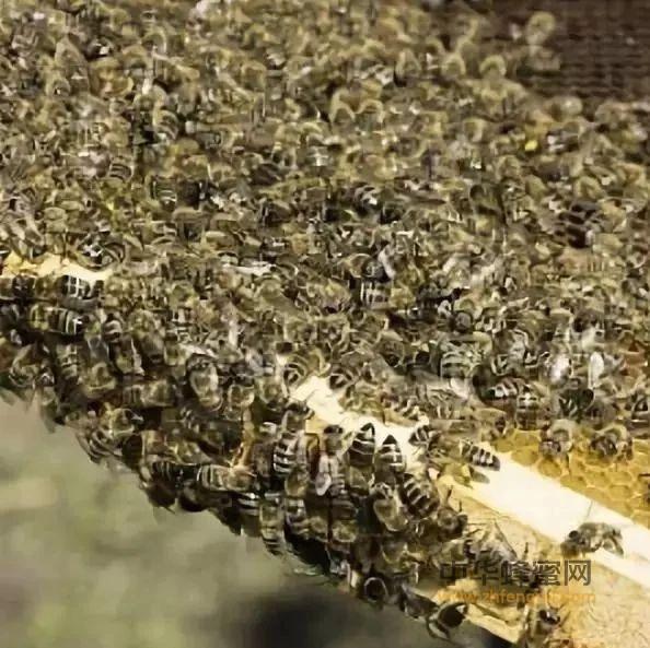 【蜂蜜宝宝】_土养中蜂几月份割蜜