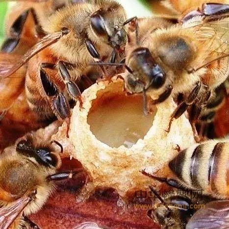 常吃蜂王浆,更有精气神!